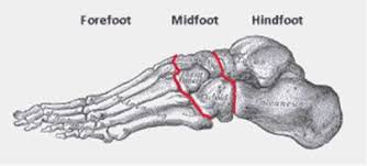 Foot anatomy.
